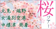 桜 お花見ツアー